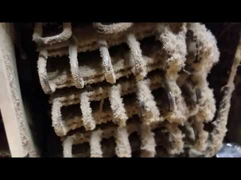 How to clean your condenser coils on your refrigerator