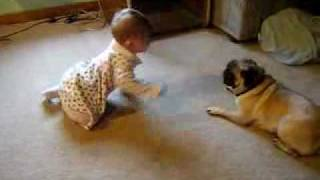 the chasers cute baby and a pug