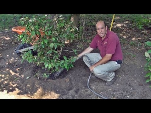 How to Plant a Potted Tree or Shrub - Part II