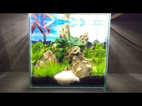 Nano Cube Aquarium Mountains Dragon Stone Aquascape