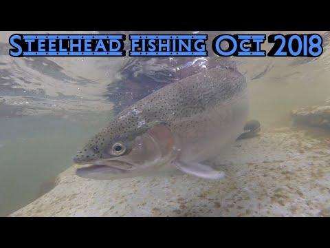 Steelhead Fishing Walnut Creek Using Skein Oct 2018
