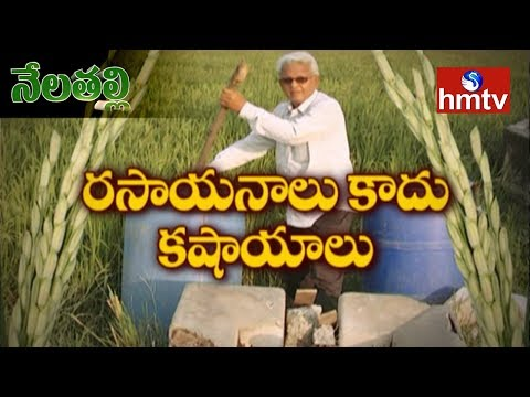 Subhash Palekar Natural Farming Guide By Warangal Farmers Gautam | Nela Talli | Telugu News | hmtv