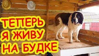 Покрасили БУДКУ В ЦВЕТ ФЛАГА. Уборка и тюнинг вольера для собаки. Московская сторожевая Булат