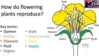 Fertilization in flowering plants | Reproduction in plants | Pollination