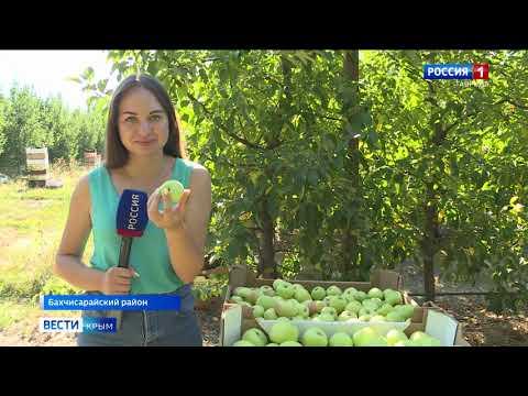 Вопрос: Какой будет урожай яблок в Подмосковье в 2020 г. Какие есть приметы?