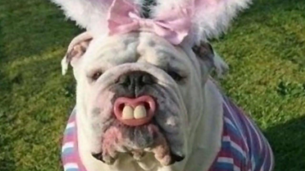 собак в прикольных костюмах