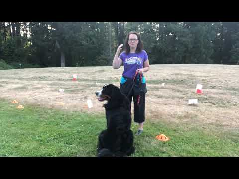 Training Rally Obedience With Distractions! How To Get Your Dog Started In Rally!