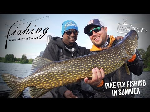 Fishing in the Middle of Sweden - Pike Fly Fishing in the Summer - Kanalgratis.se