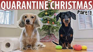 Ep#6: QUARANTINE CHRISTMAS - Cute Dachshunds Get Ready for The Holidays!