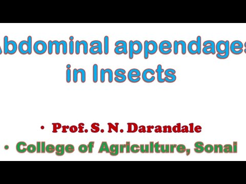 Abdominal Appendages In Insects