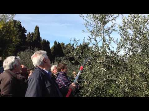 Cippatore fbc cip.10.pf.ri olivi