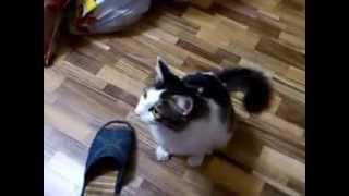 Кот ест конфету mp4