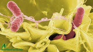 Salmonela v kuřecím a krůtím mase: smrtelná, přesto legální