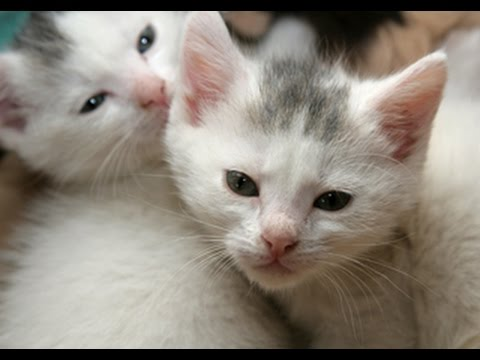 Kittens Grooming Together |  Cute Kitten Grooming Ever
