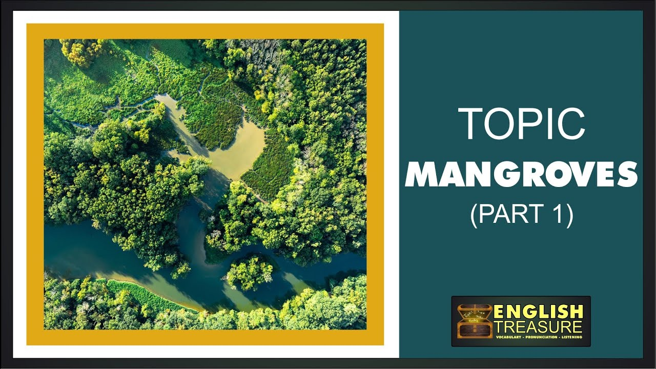 Mangroves (Part 1): English Treasure – Vocabulary, Listening, Pronunciation
