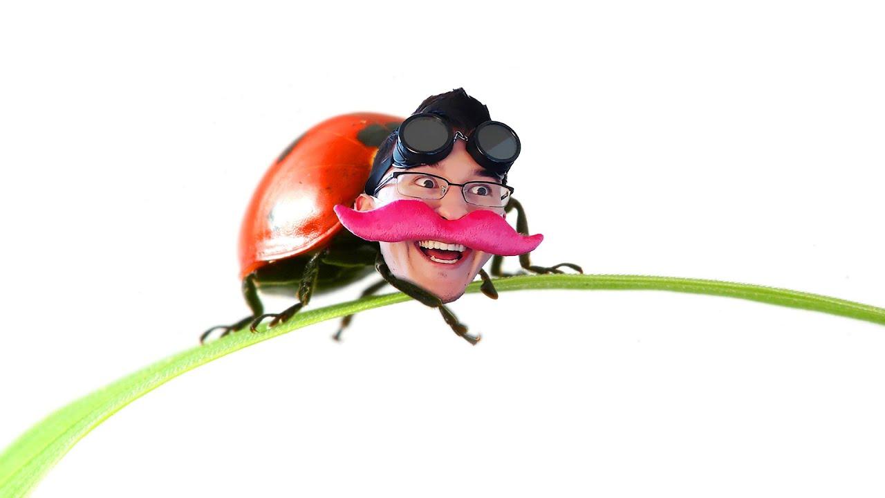 big adventure little bug youtube