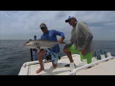 Tampa Bay Sight Fishing Amberjack Offshore