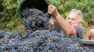 The Territory of Balsamic Vinegar of Modena