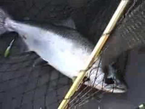 Solo Salmon fishing Filming fighting netting trolling FBR