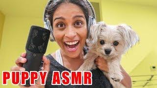 MY DOG TRIES ASMR (EATING & PLAYING)