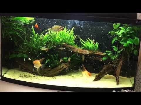 Вопрос: Можно ли аквариумных рыбок кормить только замороженным кормом?