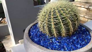 Celebrity Succulent Installation in Los Angeles GRAND REVEAL