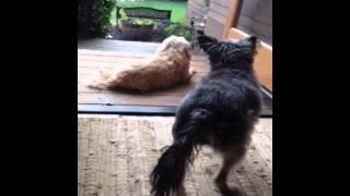 Прикол. Ты нарываешься ?(Больше смешного видео на http://rufun.net/fun/1813/, 2015-04-08T15:26:17.000Z)