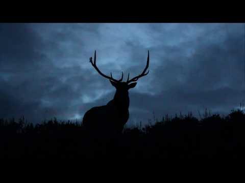 Bull Elk Bugling at Night in Yellowstone