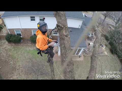 SPEED KILLS (Tree Climbing Fail)