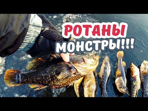 УРА! ПЕРВЫЙ ЛЕД!!! Открываю зимний сезон. Рыбалка на КРУПНОГО РОТАНА