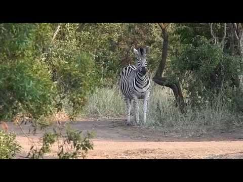 SOUTH AFRICA  into the Wild