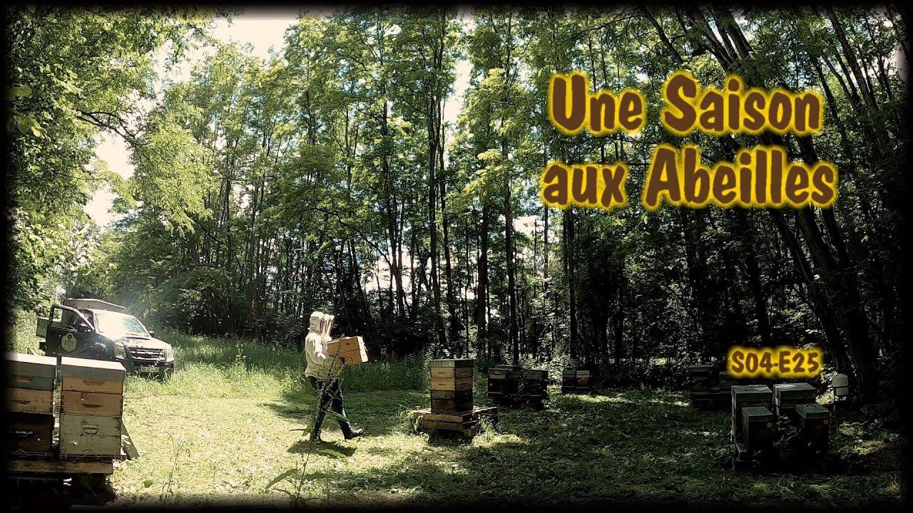 Une Saison aux Abeilles - S04 E25