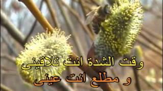امال ماهر اتقى ربنا فيا كاريوكى .avi