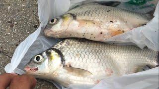 ตกปลา Ep.1 สุดมันส์!! ตกปลาหน้าดิน หมายธรรมชาติ แม่น้ำกวง
