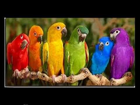 Le petit oiseau de toutes les couleurs youtube for Alexandre jardin le petit sauvage