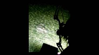 Family bowfishing for Southern Stingray in Miami