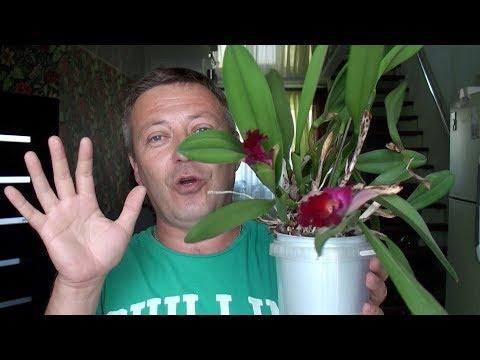 орхидеи от грибковой инфекции ЛЕГКО избавить!