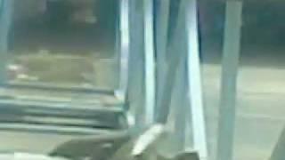 Video | khung long an thit nguoi | khung long an thit nguoi