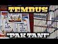 Cendet  Pak Tani  Nyeri Juara  Volume Nya Tembus Tembus Romo Channel  Mp3 - Mp4 Download