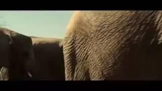 Animals sex