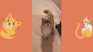 BEST CAT MEMES   FUNNY CAT VIDEOS 1