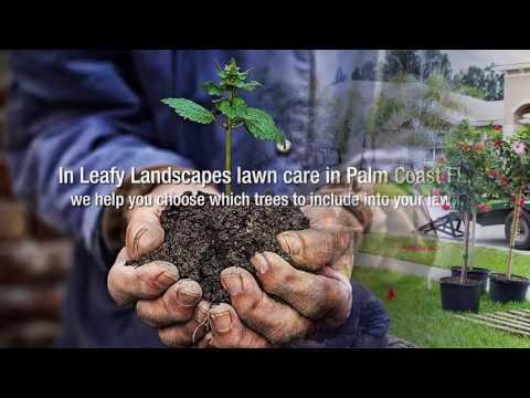 Reasons For Adding Trees To Your Lawn – Leafy Landscapes
