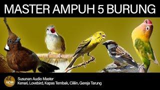 Download Mp3 Master Burung Full Tembakan  Kenari, Lovebird, Kapas Tembak, Cililin, Gereja Tar