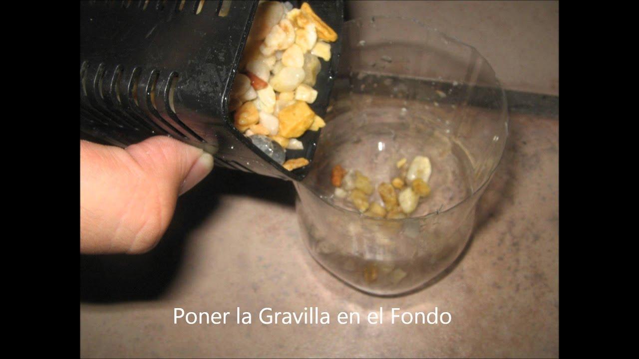 Como hacer filtro casero y sencillo para acuario youtube for Filtro casero para estanque