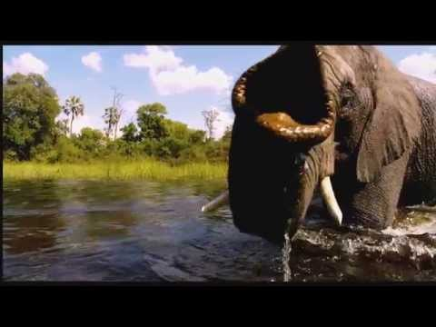 BBC Earth's Wild Africa