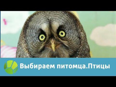 Выбираем питомца с Алексеем Ягудиным. Птицы