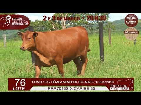 LOTE 76 CONQ 1317