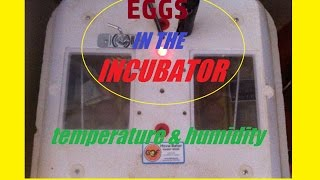 Eggs in the Incubator, Humidity and Temperature