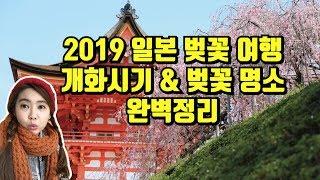 2019 일본 벚꽃 여행 개화시기 & 벚…