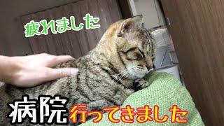 野良保護猫ココさん。病院に連れて行って判明した事。